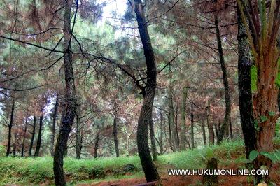 Ilustrasi kawasan hutan. Foto: SGP