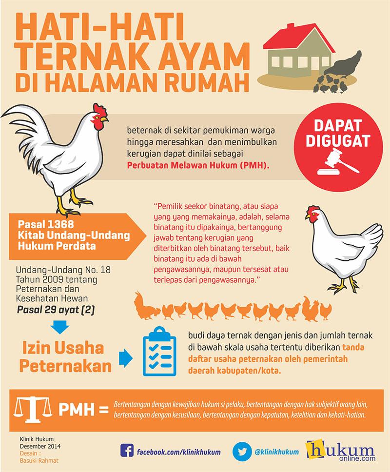 Ini Akibat Hukum Jika Membangun Peternakan Ayam di Lingkungan Rumah