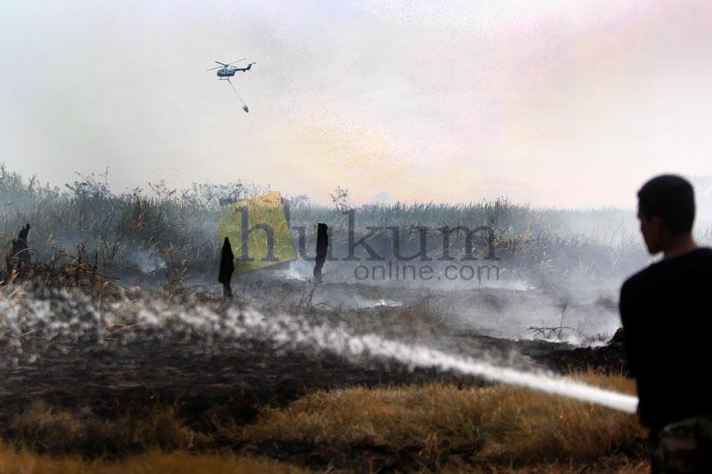 Ilustrasi kebakaran lahan. Foto: RES