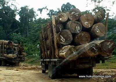 Praktik penggundulan hutan oleh perusahaan tambang batu bara dan perkebunan kelapa sawit. Foto Ilustrasi: SGP/Hol