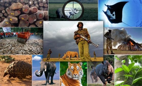Perlindungan terhadap satwa yang terancam punah. Foto: CITES.ORG