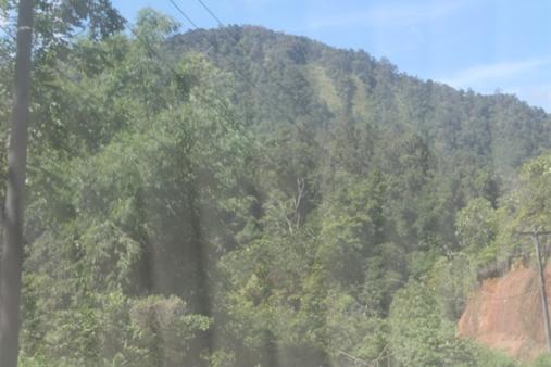 Kawasan hutan. Pemerintah mengakui hutan adat di beberapa daerah. Foto: MYS