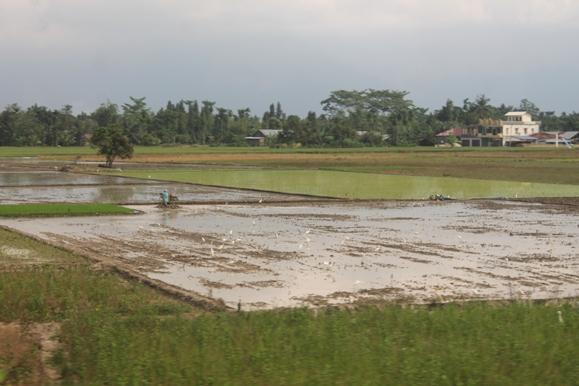Lahan pertanian sebagai salah satu objek redistribusi tanah dalam reforma agraria yang memerlukan pendaftaran tanah. Foto: MYS