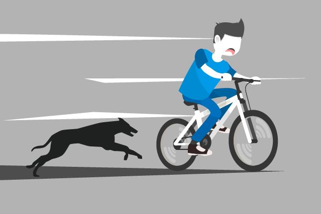 Kisah Advokat dan Gangguan Anjing Peliharaan
