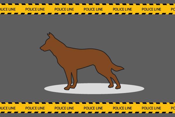 Ini Dasar Hukum 'KTP' Anjing