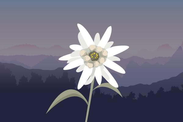 Ancaman Sanksi Jika Mengambil/Memetik Bunga Edelweis