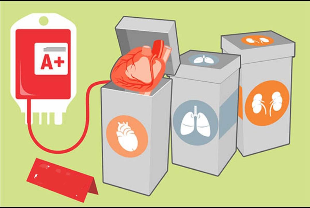 Pengaturan Donor Darah di Indonesia